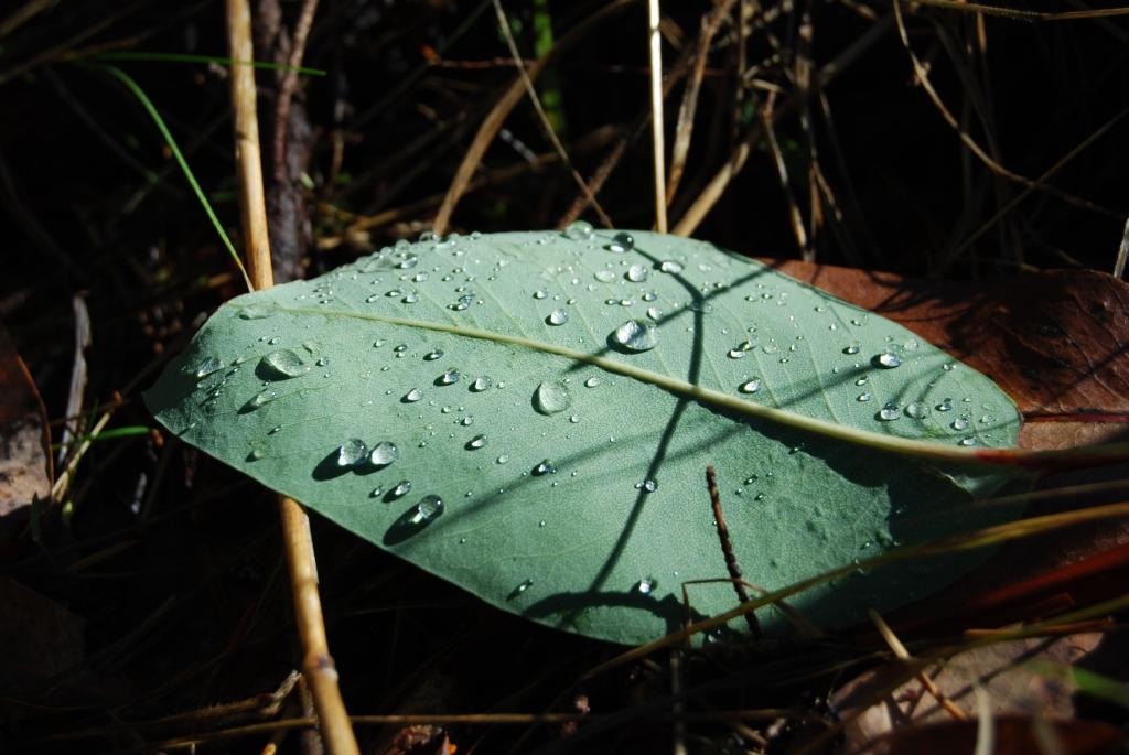 Rain droplets on a sunlit leaf
